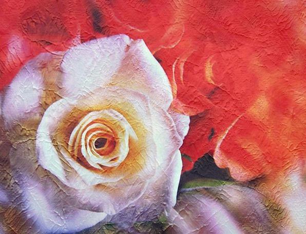 Rose Design White Rose Rose Painting Image Rose Bl