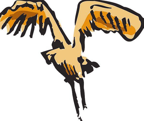 Bird Fowl Annexes Landing Mooring Wings Feathers D