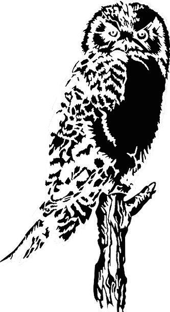 Owl Fowl Perching Resting Bird Sitting Sedentary H