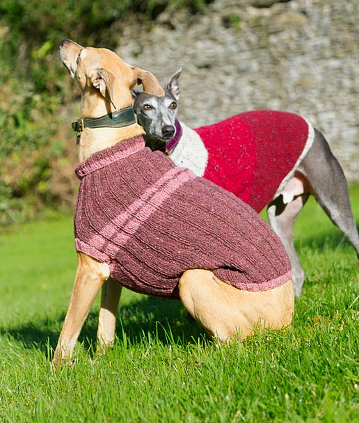 Whippet Canine Jacket Cover Dog Blue Azure Jumper