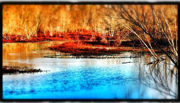 Winter Season Aquatic Swamp Marsh Water
