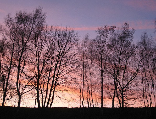 Afterglow Warmth Landscapes Woodland Nature Tree S