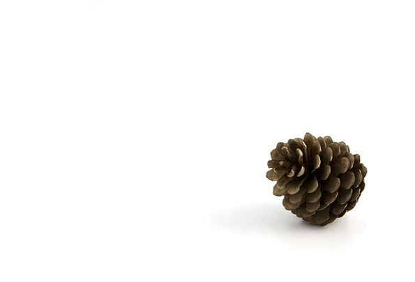 Pine Long Textures Pinecone Backgrounds Autumn Fal