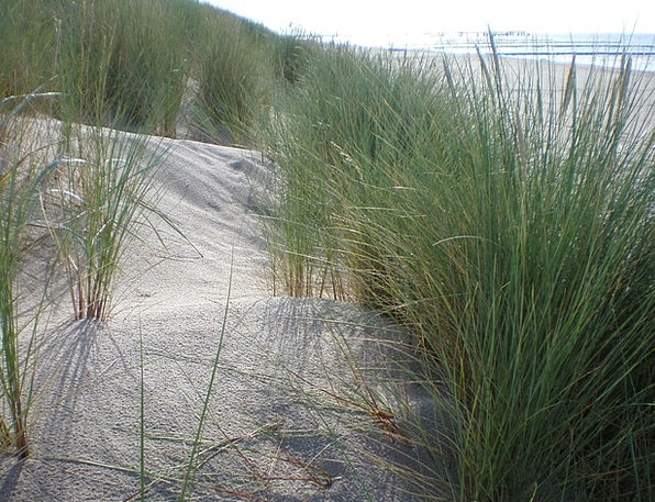 Dune Grass Vacation Seashore Travel Bank Set Beach