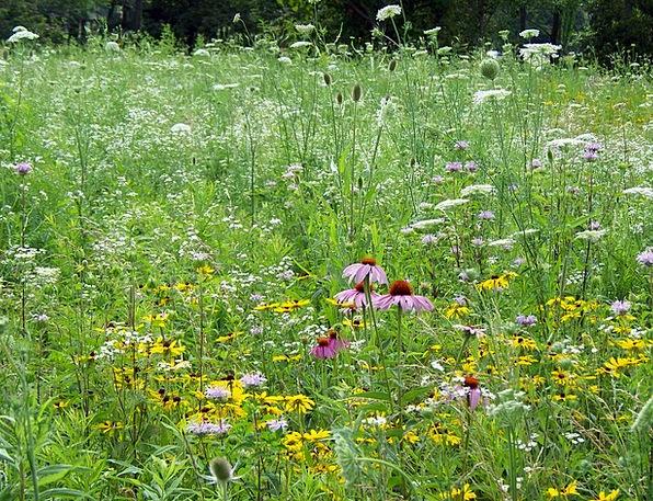 Flowers Weeds Plants Florae Wildflowers Valley Fie