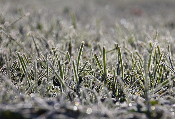 Grass Lawn Landscapes Nature Cold Emotionless Fros
