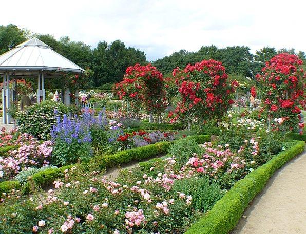 Roses Designs Landscapes Bloodshot Nature Flower F