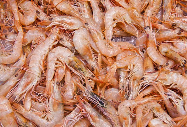 Shrimp Textures Backgrounds Crustaceans Shellfish