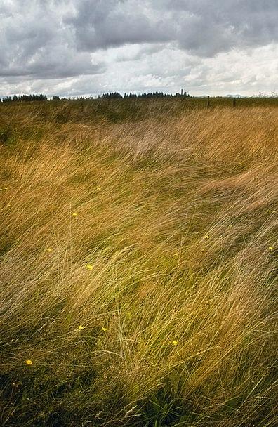 Landscape Scenery Landscapes Lawn Nature Windy Blu
