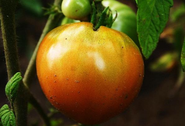 Tomato Drink Ready Food Food Nourishment Ripe Vege