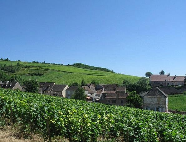 Burgundy Maroon Creeper Hill Knoll Vine Vineyard W