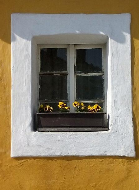 Window Gap Plants Old Ancient Flowers Flower Box