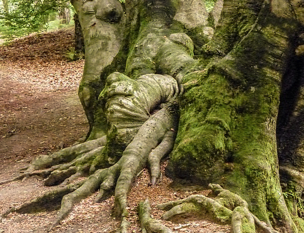 Root Origin Landscapes Sapling Nature Forest Woodl