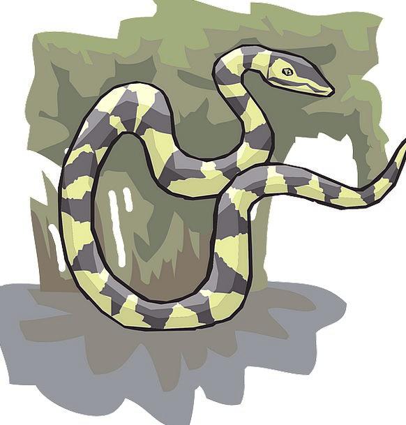 Snake Serpent Landscapes Sapling Nature Plant Vege