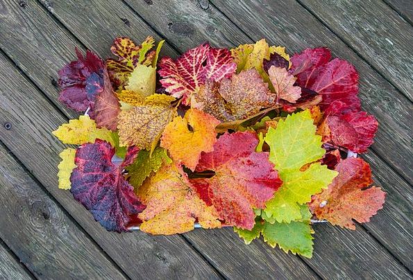 Autumn Fall Golden Autumn Fall Foliage Landscape F