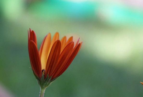 Daisy Landscapes Carroty Nature Colorful Interesti