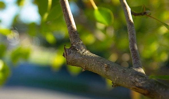 Pruning Clipping Division Cut Censored Branch Tree