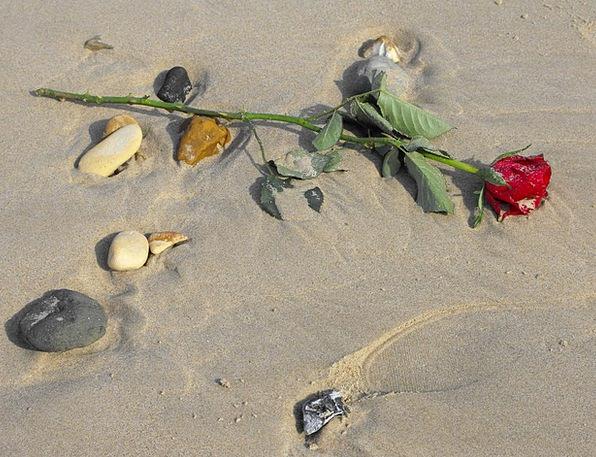 Red Rose Vacation Seashore Travel Sand Shingle Bea