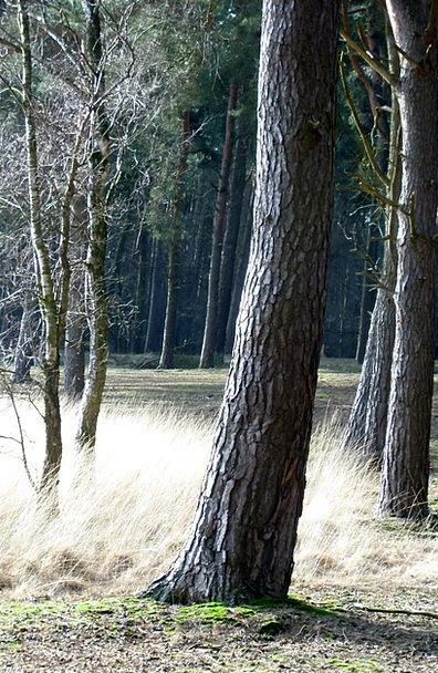 Forest Woodland Landscapes Nature Trees Plants Fai
