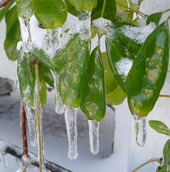 Icicles Stalactites Landscapes Nature Leaves Green