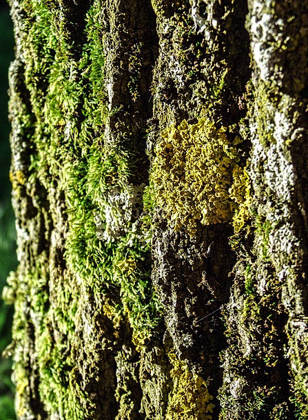 Tree Sapling Landscapes Record Nature Bark Bay Log