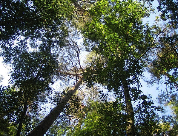 Treetop Crown Landscapes Nature Forest Woodland Na