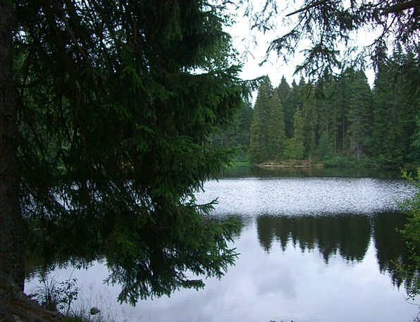Mathisleweiher Mirroring Reflecting Bog Lake Firs