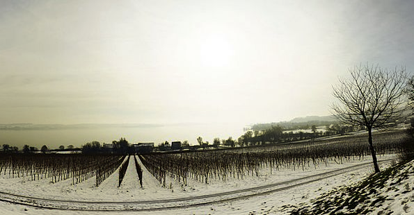 Winter Season Snowflake Lake Constance Snow Panora