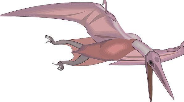 Bird Fowl Hovering Wings Annexes Flying Dinosaur R