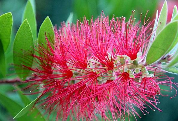 Flower Floret Landscapes Nature Fluffy Fleecy Pipe