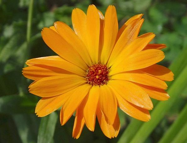 Marigold Landscapes Nature Gardening Horticultural