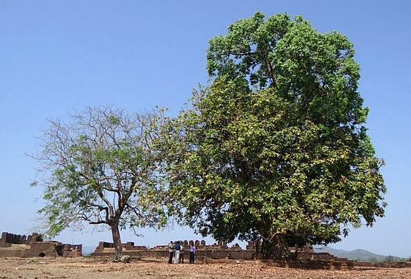 Sacred Tree Landscapes Memorial Nature Mirjan Fort