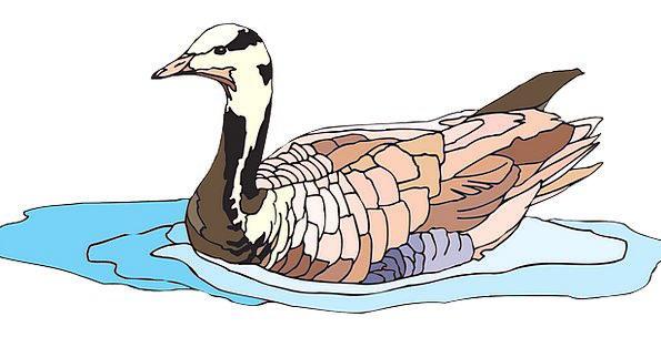 Water Aquatic Fowl Goose Bird Bar-Headed Feathers