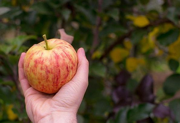Apple Drink Farmhouse Food Pick Choice Farm Tree F