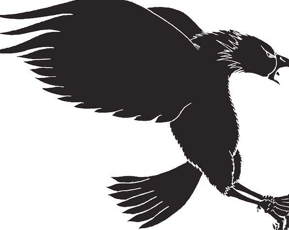 Eagle, Outline, Bird, Fowl, Silhouette, Wings, Annexes