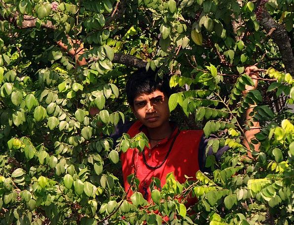 Boy On Tree Tree Sapling Picking Fruits Starfruit