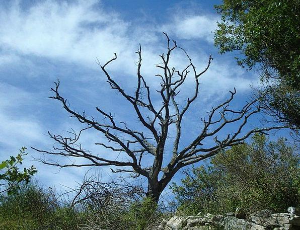 Tree Sapling Landscapes Nature Dead Deceased Dead