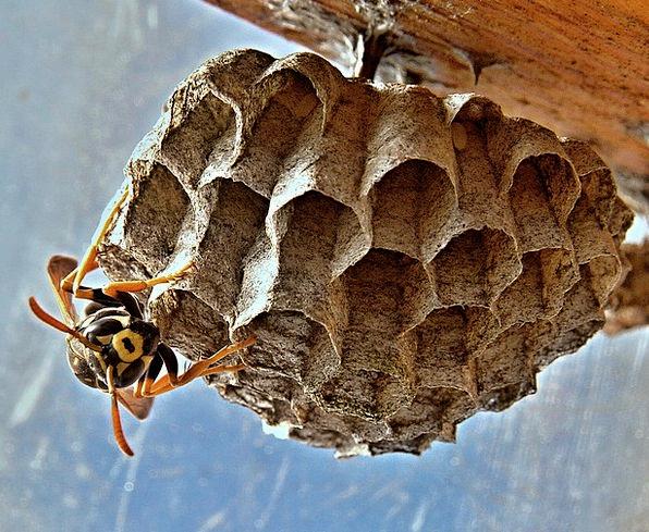 Vosika French Shells Insect Bug Nests Macro Instru