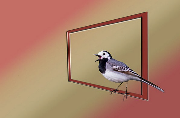 White Wagtail Fowl Nature Countryside Bird Photo A