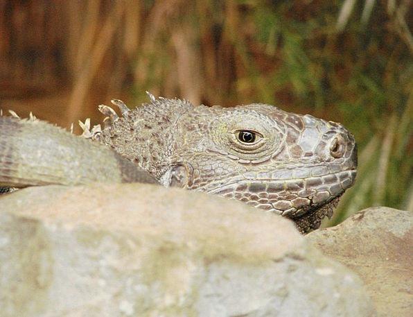 Lizard Physical Gecko Animal Creature Being Lizard