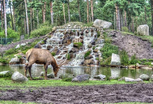 Hirsch Animals Faunae Serengeti National Park Hang