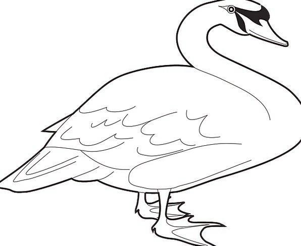 Bird Fowl Annexes Long Extended Wings Neck Necklin