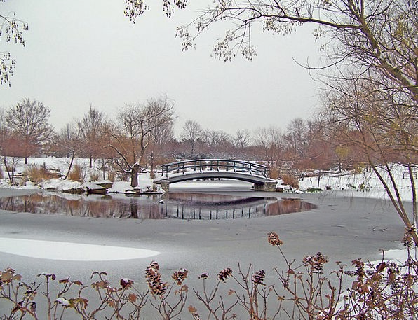 Bridge Bond Common Snow Snowflake Park Lake Outdoo