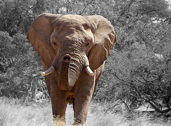 Elephant Monster Africa Namibia Tusk African Bush