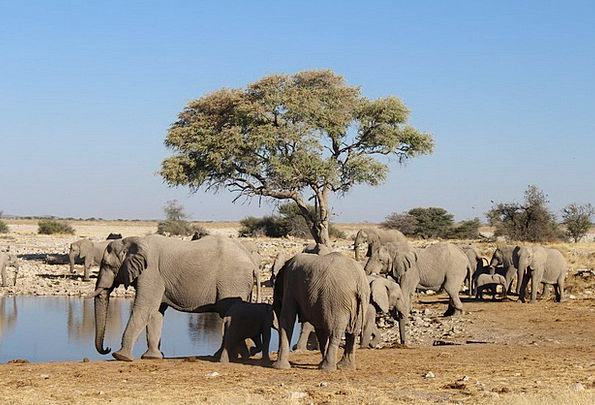Elephants Monsters Landscapes Nature Wild Rough Na