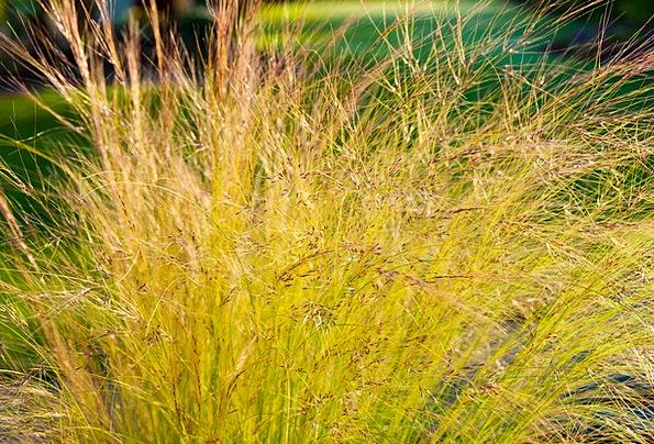 Grass Lawn Taillight Halme Back Light Girl Hair Bl