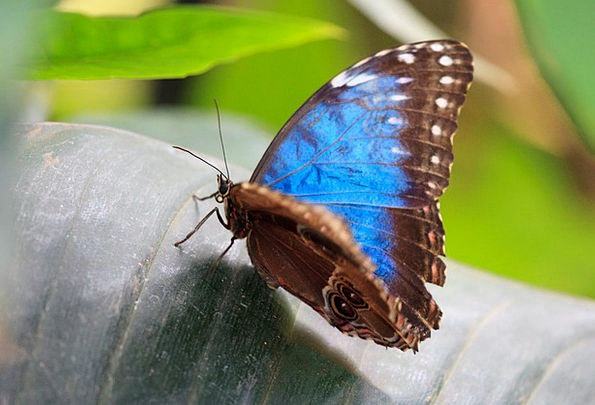 Animal Physical Lovely Blue Azure Beautiful Insect