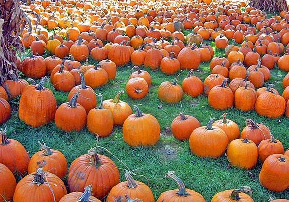 Pumpkins Landscapes Nature Fall Reduction Autumn H