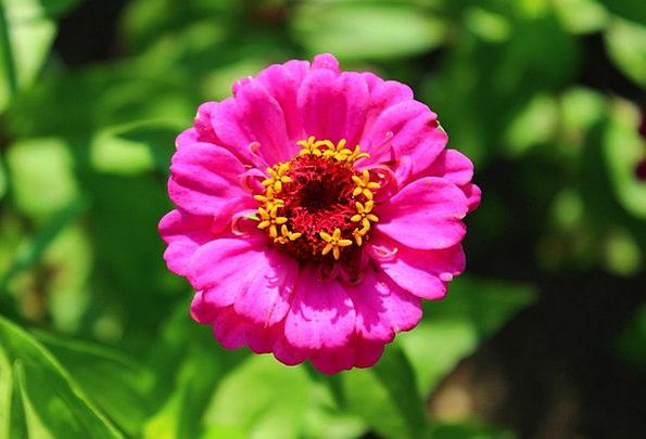 Flower Floret Landscapes Countryside Nature Pink F