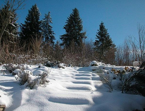 Winter Season Landscapes Snowflake Nature Nature C
